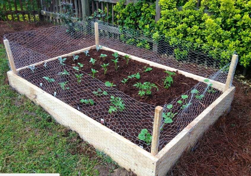 Chicken Wire Garden Fence