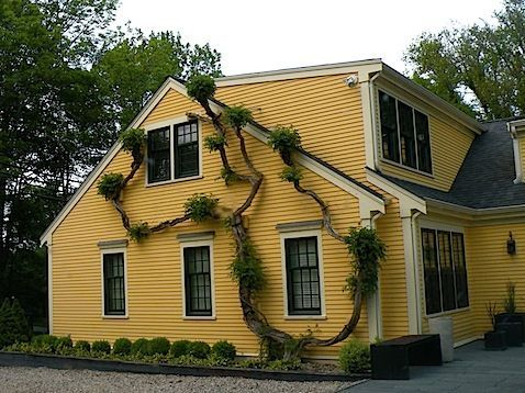 yellow and complement the color cape cod house style