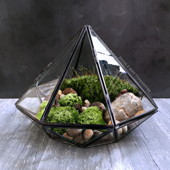 Terrariums Case