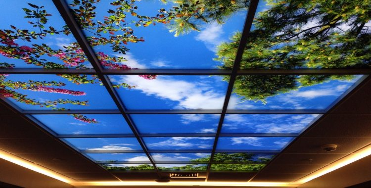 MuralsBasement Ceiling